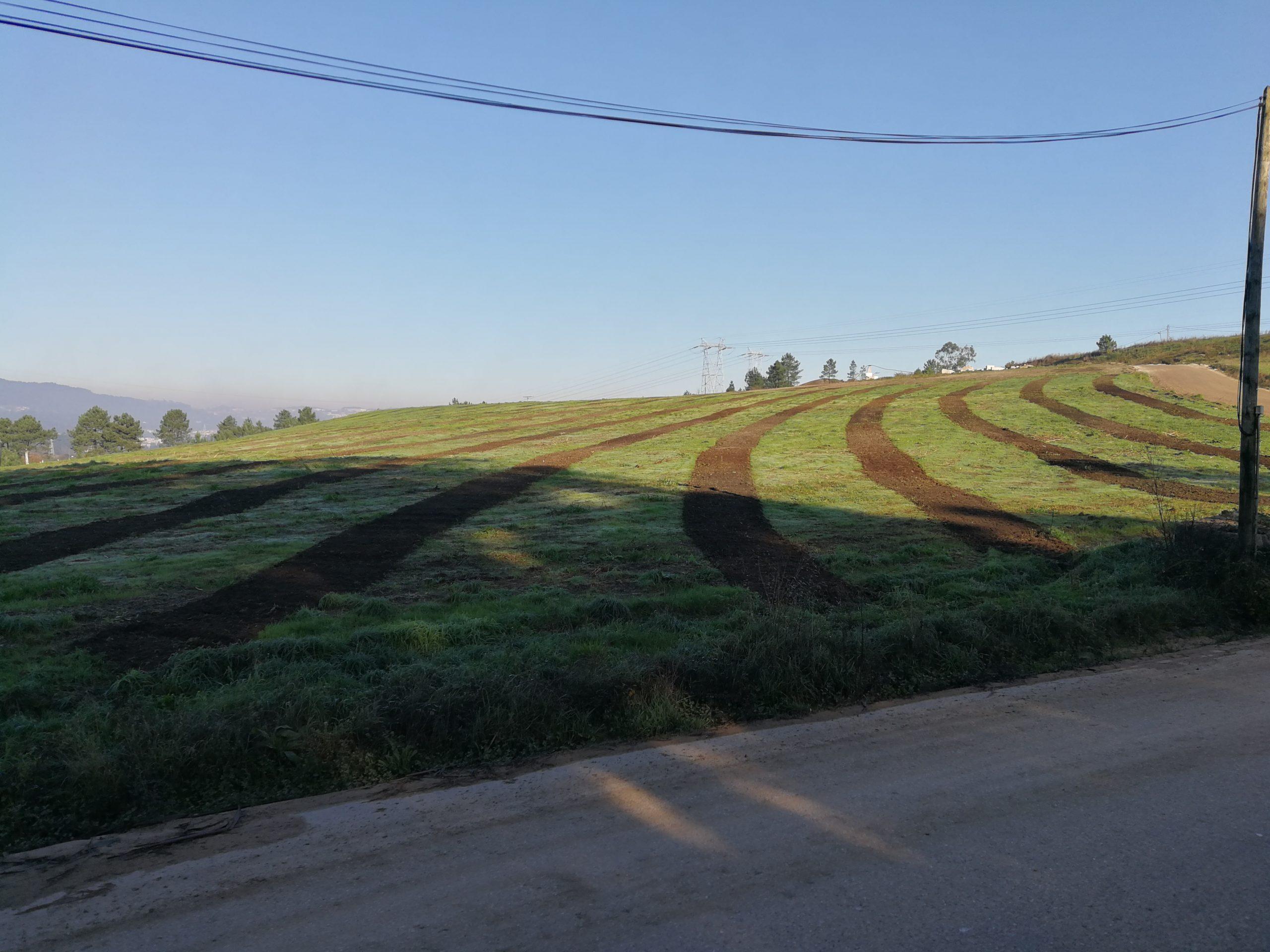 """Unha prantación de 1.000 piñeiros rematará a restauración do terreo da antiga """"Canteira Ferro"""" e a súa devolución ó Concello de O Porriño"""